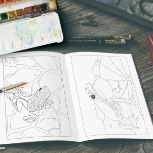 frogs colouring book